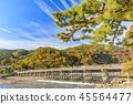 Arashiyama autumn leaves 45564477