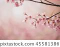 Cherry blossom flowers , sakura flowers in pink background vintage style 45581386