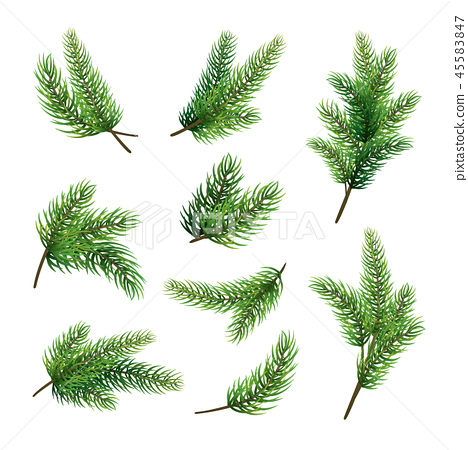 Set of fir branches isolated on white background 45583847