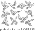 Pigeon flying with olive branch, vector sketch 45584139