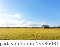 Scenery of Biei Hokkaido 45586081