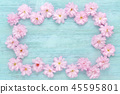 pink cherry fresh flowers frame on blue wooden background, flat lay, with copy space 45595801