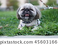 Dog that seems to have a sneezing 45603166
