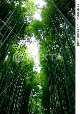 日本京都綠竹籬芭日本京都綠色竹子森林 45603643