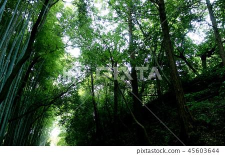 日本京都綠竹籬芭日本京都綠色竹子森林 45603644