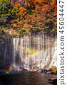 shiraito waterfall scenery in autumn 45604447