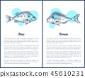Bass and Bream Fish Posters Vector Illustration 45610231