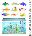 魚 水族館 寵物 45610317