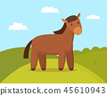 horse, animal, equine 45610943