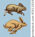 hare rabbit animal 45611024