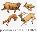 animal, deer, bear 45611028