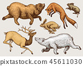 Soaring red Fox Hare Rabbit northern brown Bear Deer. Set of Wild forest animal jumping up. Vintage 45611030