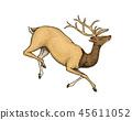 deer sketch animal 45611052