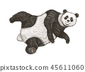 Soaring Giant panda. A wild cute animal falls down. black and white Asian bear in China. Vintage 45611060
