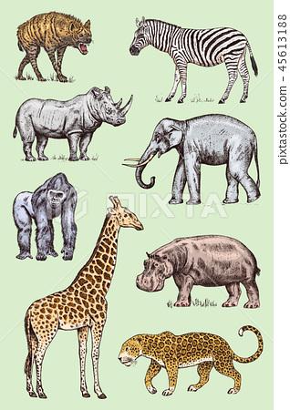 Set of African animals. Rhinoceros Elephant Giraffe Hippopotamus Leopard Hyena Western gorilla Wild 45613188