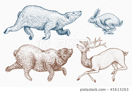 Soaring Hare Rabbit northern brown Bear Deer. Set of Wild forest animal jumping up. Vintage style 45613263