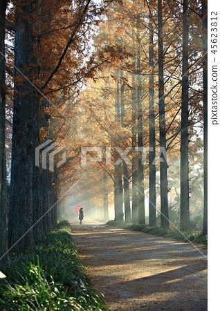 Metasequoia, Metasequoia, Autumn Sonata, Autumn Love, Naju Metagall 45623812