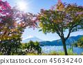 【야마나시 현] 가을의 후지산 45634240