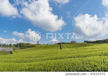 [시즈오카 현] 후지산과 차밭 45635472