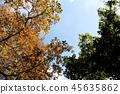 Reims Lance ใบไม้สีเหลืองฤดูใบไม้ร่วง 45635862
