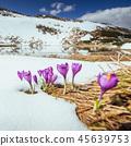flower, background, bloom 45639753
