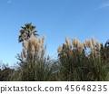팜파스그래스, 꽃, 플라워 45648235