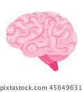 Brain organ vector illustration 45649631