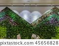 植物裝飾的牆面 45656828
