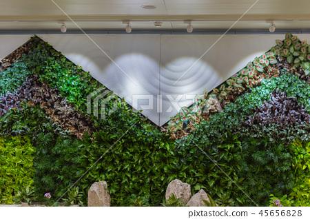 植物装饰的墙面 45656828
