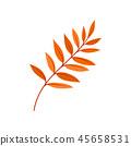 Bright autumn rowan leaf vector Illustration on a white background 45658531