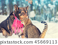 cat, animal, dog 45669113