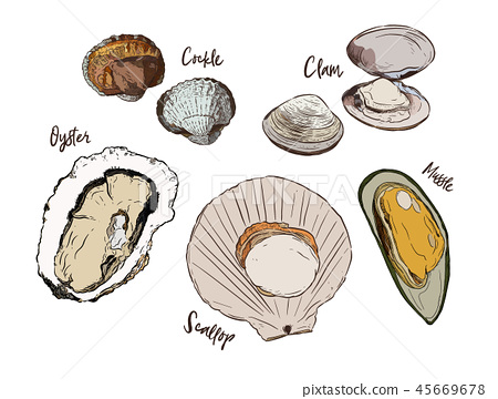 Shell, Hand draw sketch vector. Seafood set. 45669678