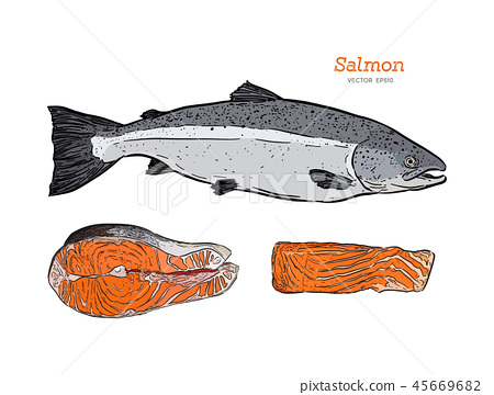 Ink sketch of salmon. Hand drawn vector 45669682