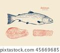 ปลาแซลมอน,แซลมอน,ปลา 45669685