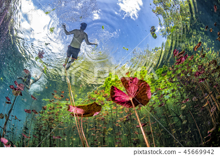 underwater gardens and water plants in cenotes  45669942