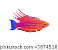 魚 異國情調 異域風情 45674518