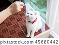 cat kitten cats 45680442