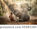 The elephants in forest and mahout  45683384