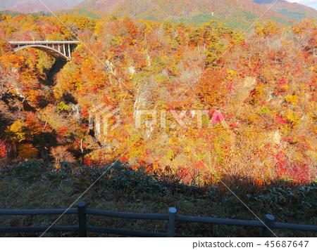 Autumn leaves autumn landscape background 45687647