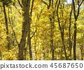 秋叶秋天风景背景 45687650