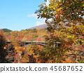 秋叶秋天风景背景 45687652