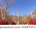 秋叶秋天风景背景 45687653