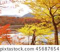 秋叶秋天风景背景 45687654