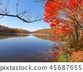 秋叶秋天风景背景 45687655
