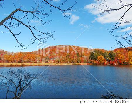 Autumn leaves autumn landscape background 45687658