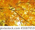 秋叶秋天风景背景 45687659