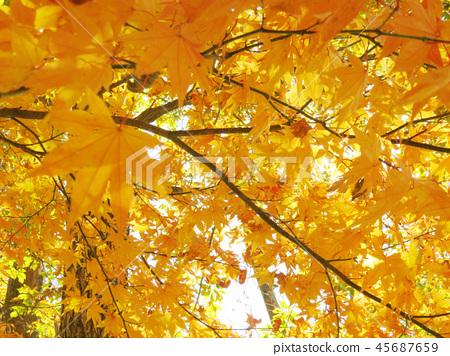 Autumn leaves autumn landscape background 45687659