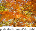 秋叶秋天风景背景 45687661