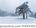 Winter tree in fog. 45693483