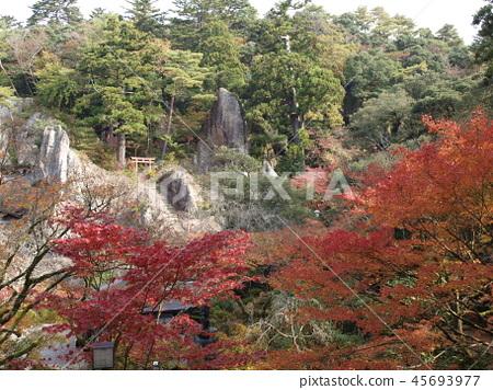 Autumn leaves of Natoya-ji 45693977